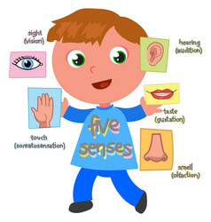 Five senses boy vector