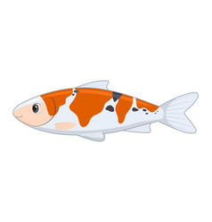 koi fish on a white background vector image