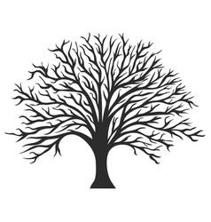 object oak tree silhouette vector image