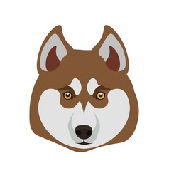 siberian husky breed close up dog isolated on vector image
