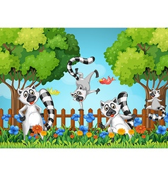 Four lemurs playing in garden vector