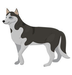 husky breed dog graphics isolated on white vector image
