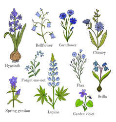 set of blue flowers plants vector image