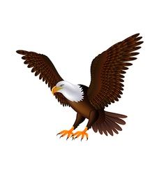 Flying eagle isolated on white vector image vector image