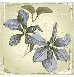 hand drawn clematis flowers in retro style vector image