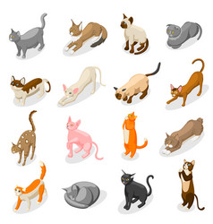 Purebred cats isometric icons vector