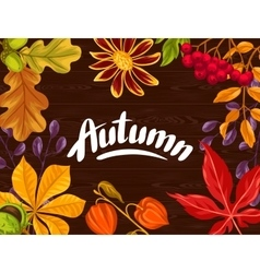 Background with autumn leaves and plants Design vector image