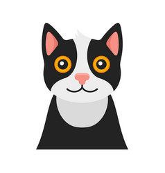 cat portrait on white background vector image
