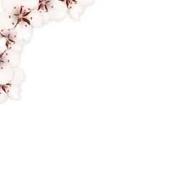 Border Made in Sakura Flowers Blossom vector image vector image