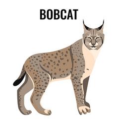 Full length spotted bobcat vector