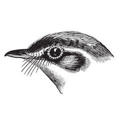 bird head vintage vector image