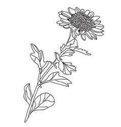 Floral decoration vector