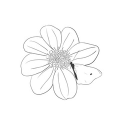 flower hand drawn vector image