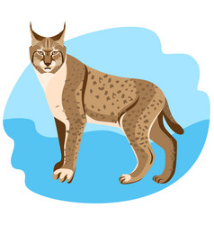 full length spotted bobcat vector image