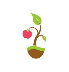 the apple tree logo vector image