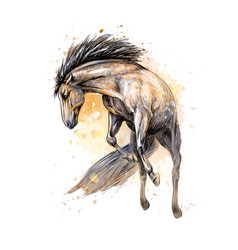 horse run gallop from splash of watercolors hand vector image