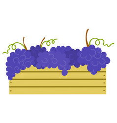Wooden container with ripe purple grapes isolated vector