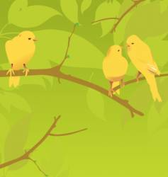 Yellow canaries vector