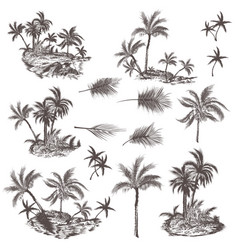 big collection hand drawn palm trees for design vector image
