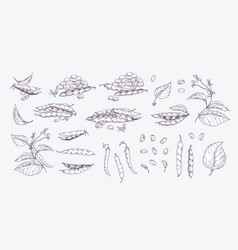 collection elegant realistic drawings black vector image
