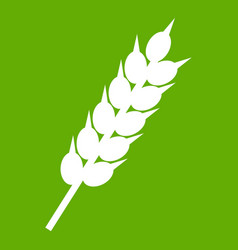 dried wheat ear icon green vector image vector image