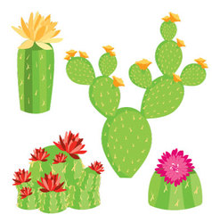 -of-different-cactus-with-flowers vector