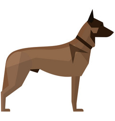 belgian malinois breed dog isolated on vector image