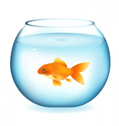 goldfish in aquarium vector image