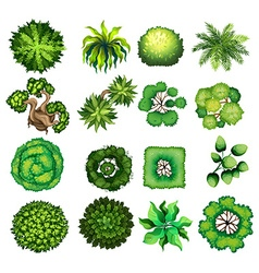 Top view of different kind of plants vector