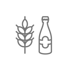beer bottle and wheat cereal grain line icon vector image