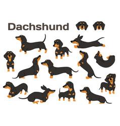 Dachshunddog in actionhappy dog vector