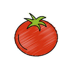 Delicious and health tomato vegetable vector