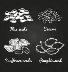 Sesame pumpkin sunflower flax seeds on vector
