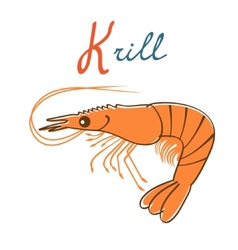K is for Krill vector image vector image