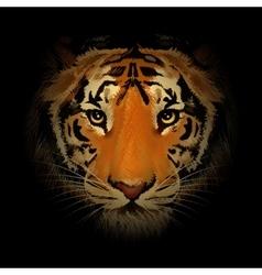 The Tiger Head vector image