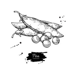 pea hand drawn isolated vector image