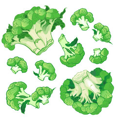 background with a pattern of broccoli vector image