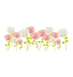 Bunch roses with stem and leaves floral design vector