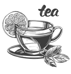 cup tea with lemon isolated on white background vector image
