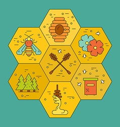 Honey Concept with Honeycomb vector image
