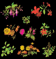 Meadow flower and leaf set isolated on black vector