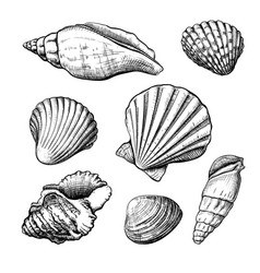 Seashells handdrawn sketch vector