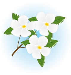 Branch of a tree with white flowers vector