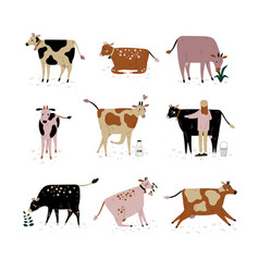 cattle breeding farming dairy cattle cows of vector image