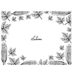 Hand drawn frame autumn maple leaves and corns vector