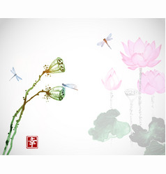 Lotus flowers and dragonflies on white background vector
