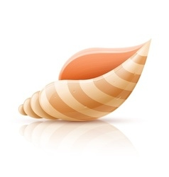 Seashell shellfish isolated vector
