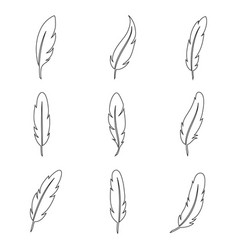 bird feather line art collection vector image