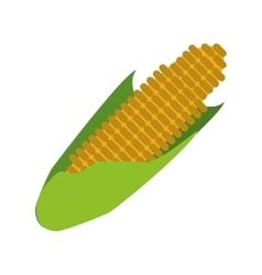 corn cob ripe leaves icon vector image