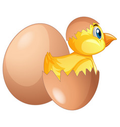 Chick comes out of egg vector